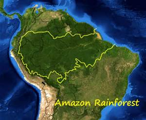 amazon rainforest rubber foam mattress native to Brazil tree